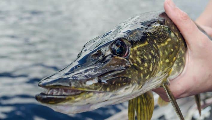 Best Rod and Reel Combo for Northern Pike Fishing