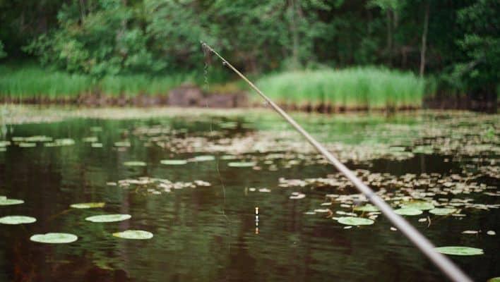 Best Swivels for Fishing