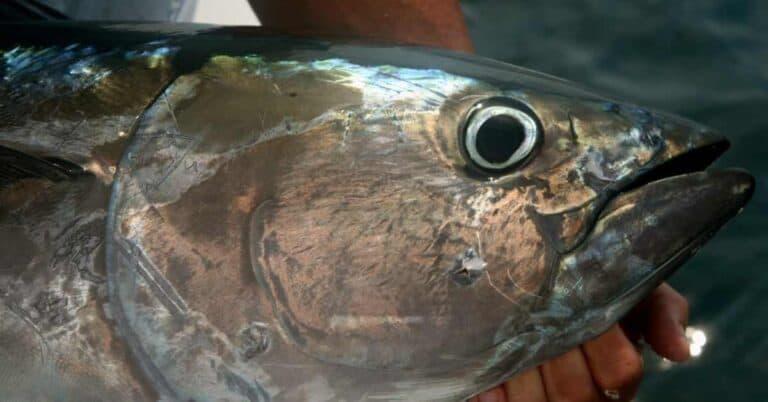 Best Tuna Fishing Lures