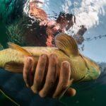 Does Fishing Hurt Fish